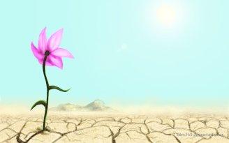 Λουλούδι στην έρημο